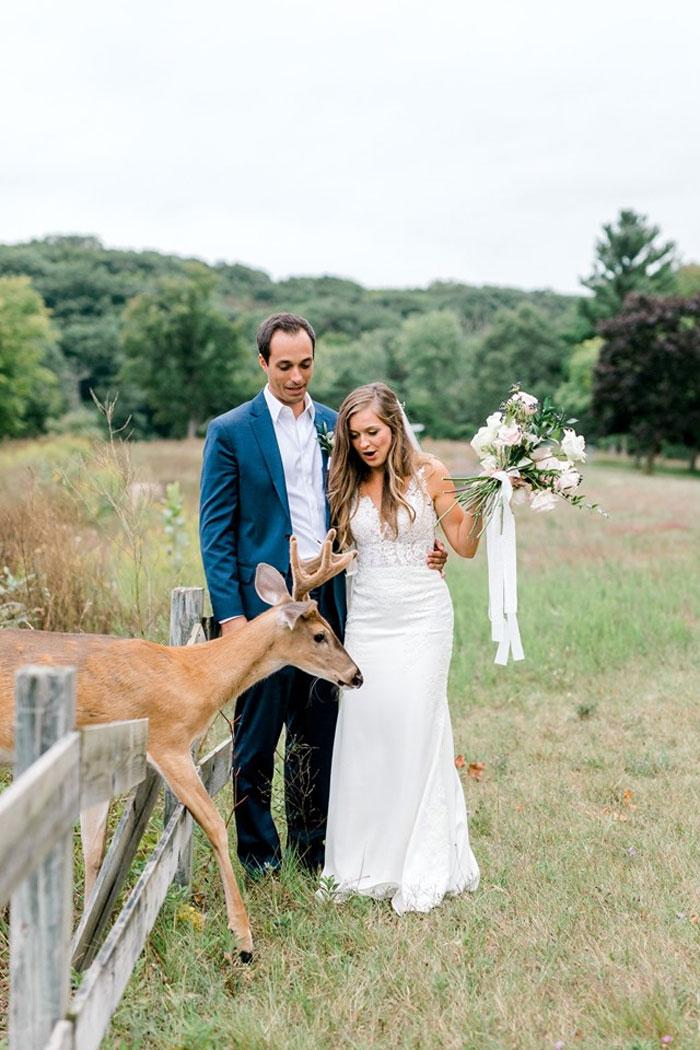 Odvážny jeleň sa zapojil do svadobného fotenia - Obrázok č. 9