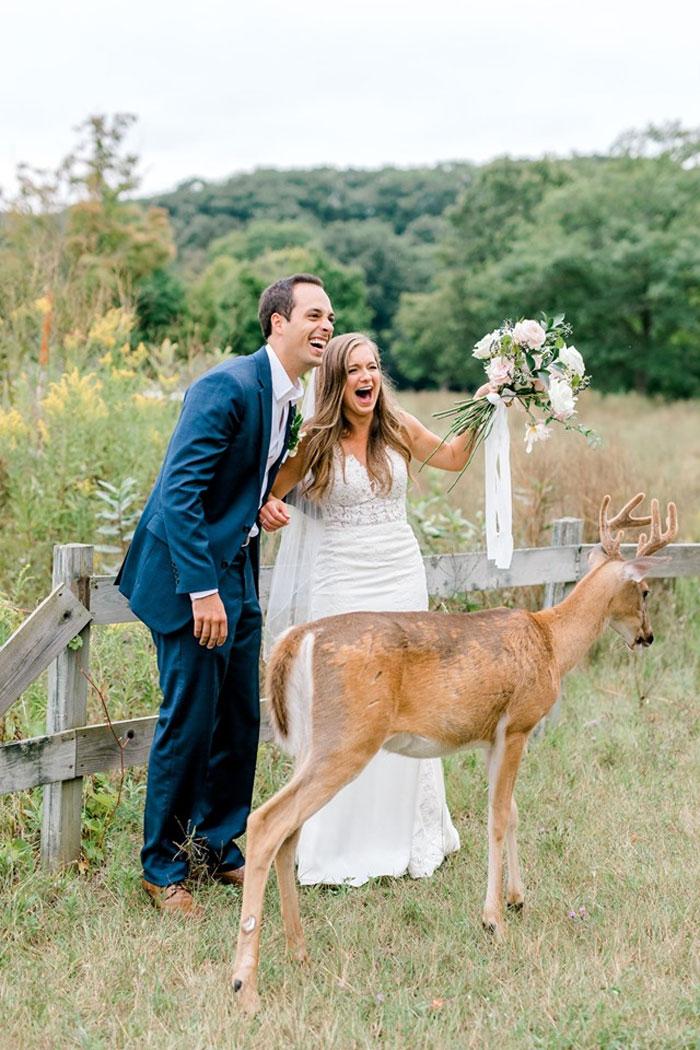 Odvážny jeleň sa zapojil do svadobného fotenia - Obrázok č. 10