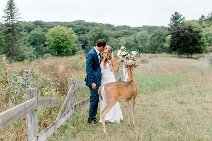 Odvážny jeleň sa zapojil do svadobného fotenia - Obrázok č. 11