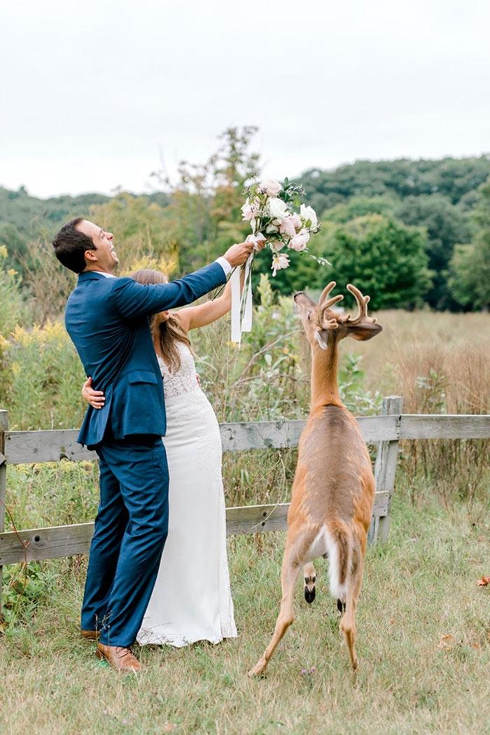 Odvážny jeleň sa zapojil do svadobného fotenia - Obrázok č. 12