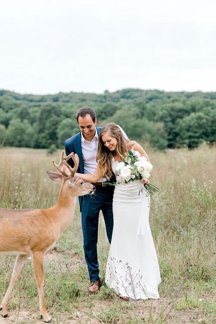 Odvážny jeleň sa zapojil do svadobného fotenia - Obrázok č. 13