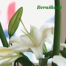 Hlavní kytička, lilie -bude se oběvovat v celé výzdobě...
