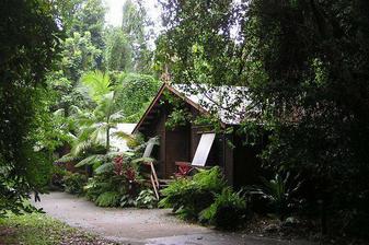 tropický deštný les na severu austrálie, tady jsme jednu noc spali
