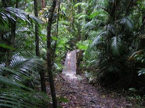 uprostřed džungle