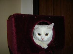 Naše kočička.