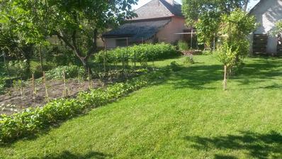 Mini úžitková záhradka,nie je nič lepšie ako čerstvé jahody, či paradajkyzo záhradky ..