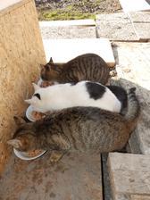 priecne parkovanie pred (macacim) domom :)