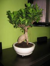nas bonsajiik ,pod telkou