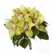 kytica bude asi z orchideí, ruží a frézií