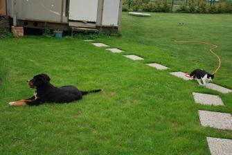 položená dlažba ke kůlně, naše zvířátka a konečně travička :)