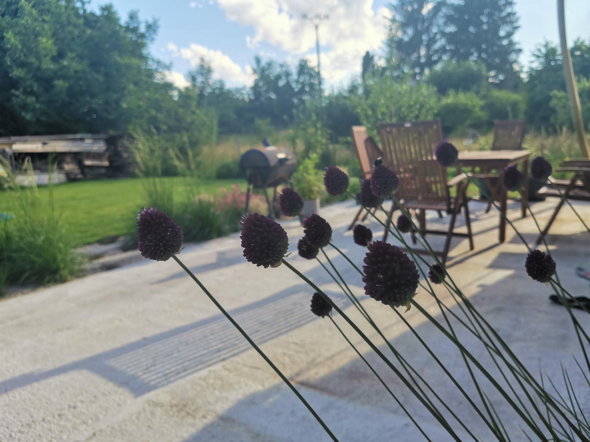 Začínáme se zahradou - Okrasné česnek přijdou na podzim do trvalkových záhonů