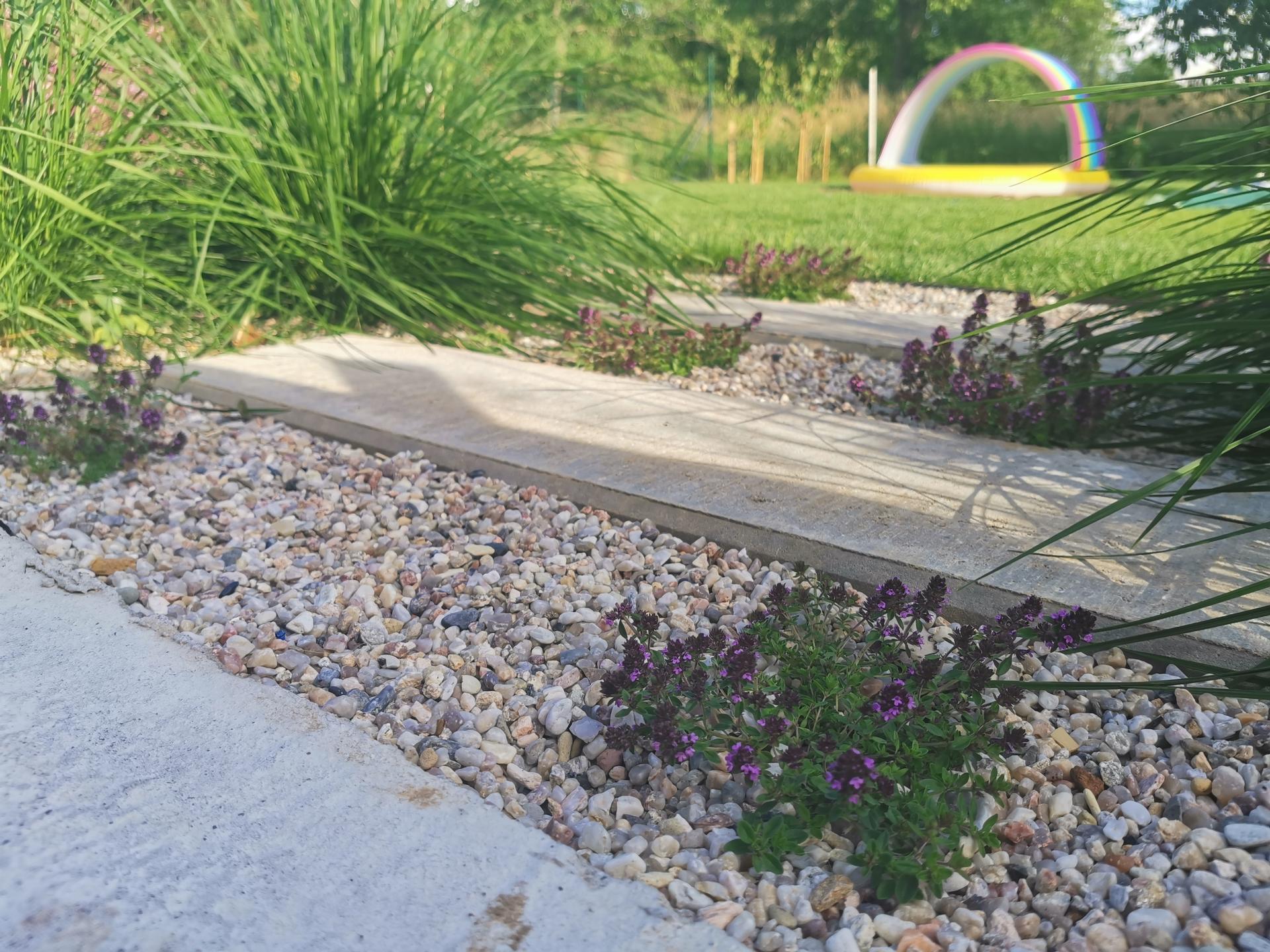 Začínáme se zahradou - Mateřídouška se začíná hezky rozrůstat a kvést