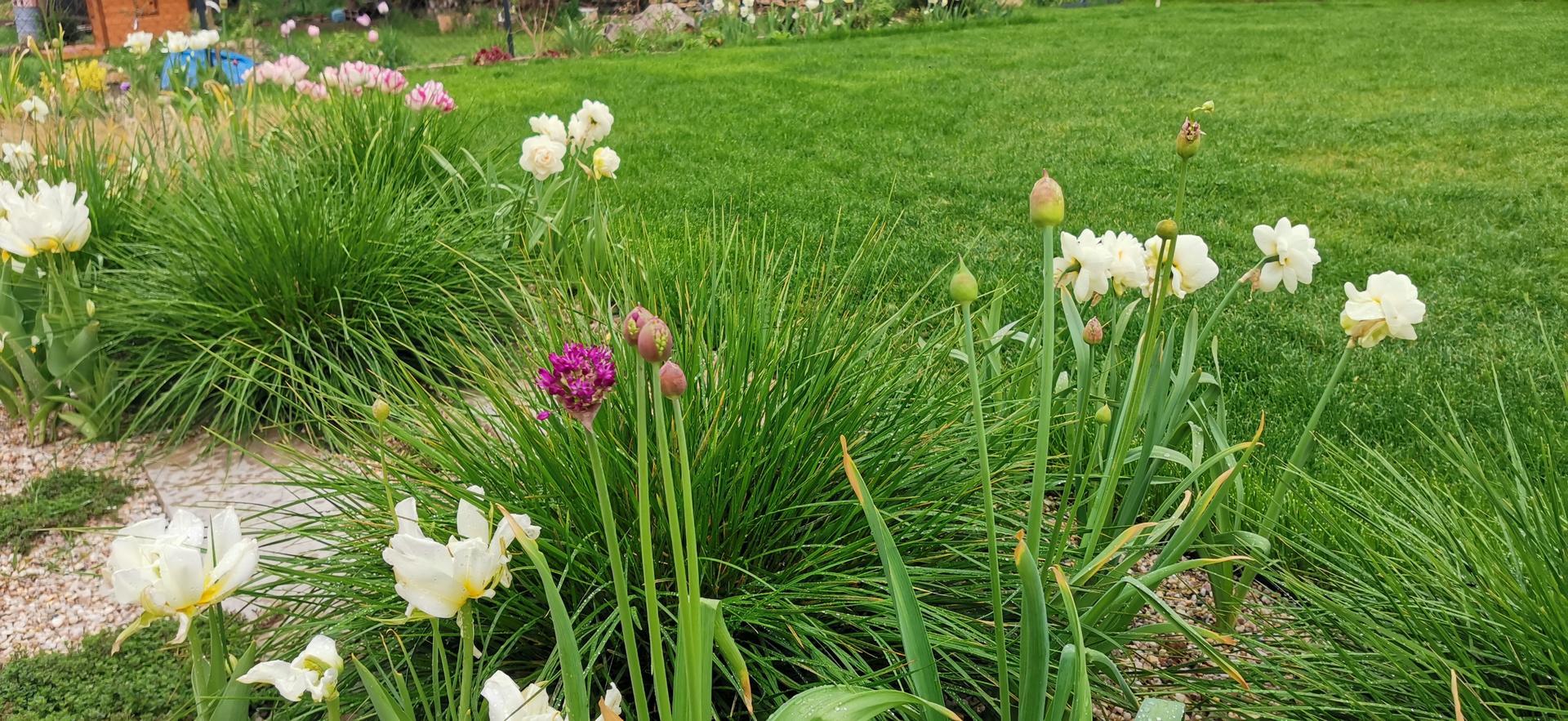 Začínáme se zahradou - Obrázek č. 34