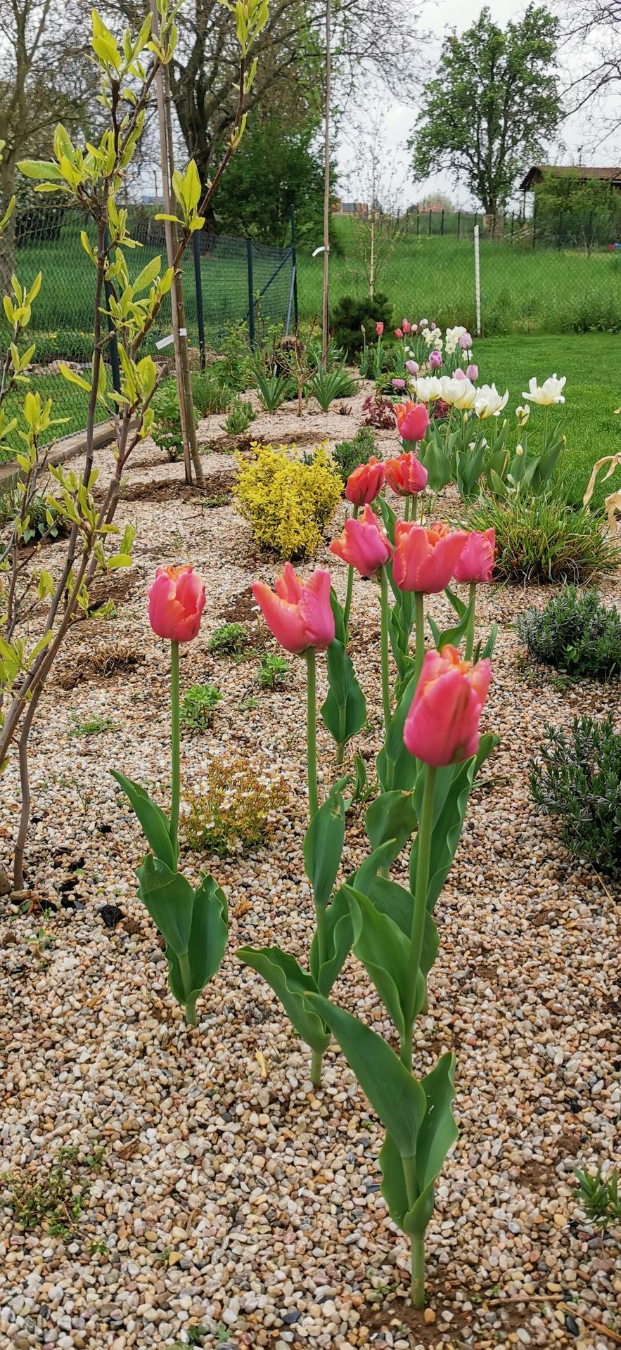 Začínáme se zahradou - Obrázek č. 35