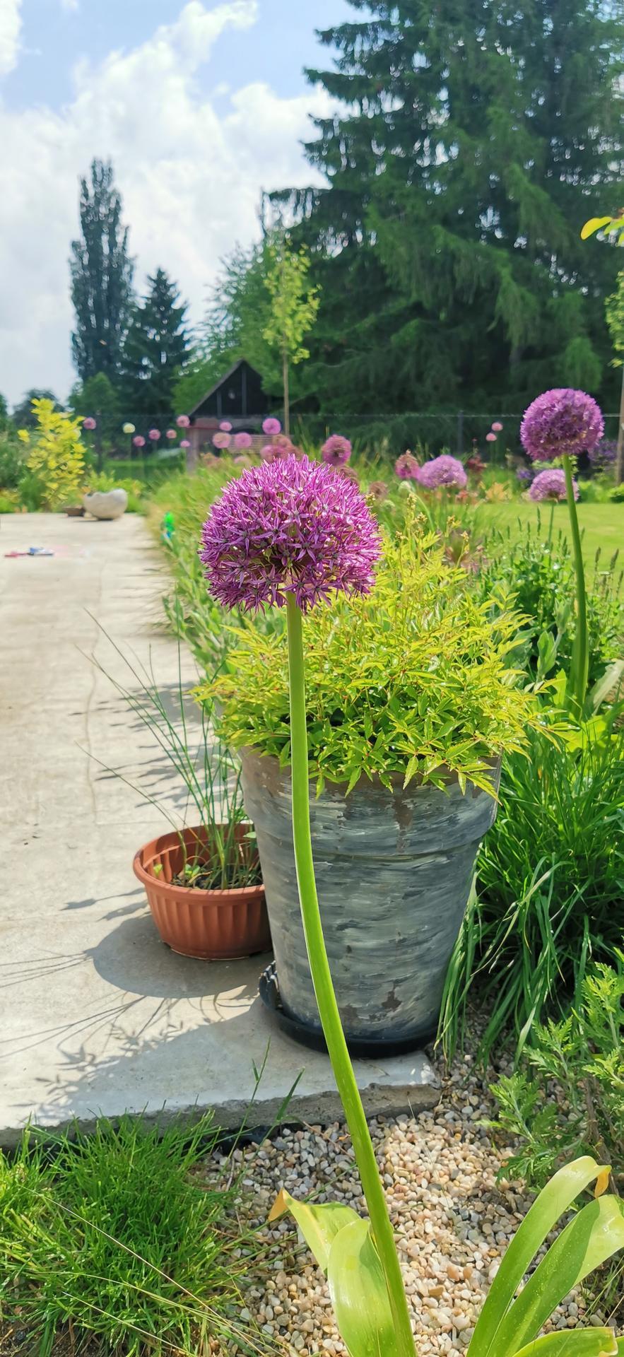 Začínáme se zahradou - Obrázek č. 47