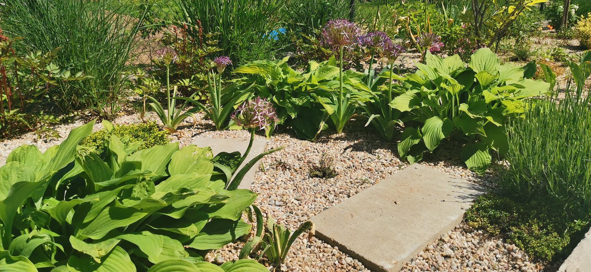 Začínáme se zahradou - Obrázek č. 43