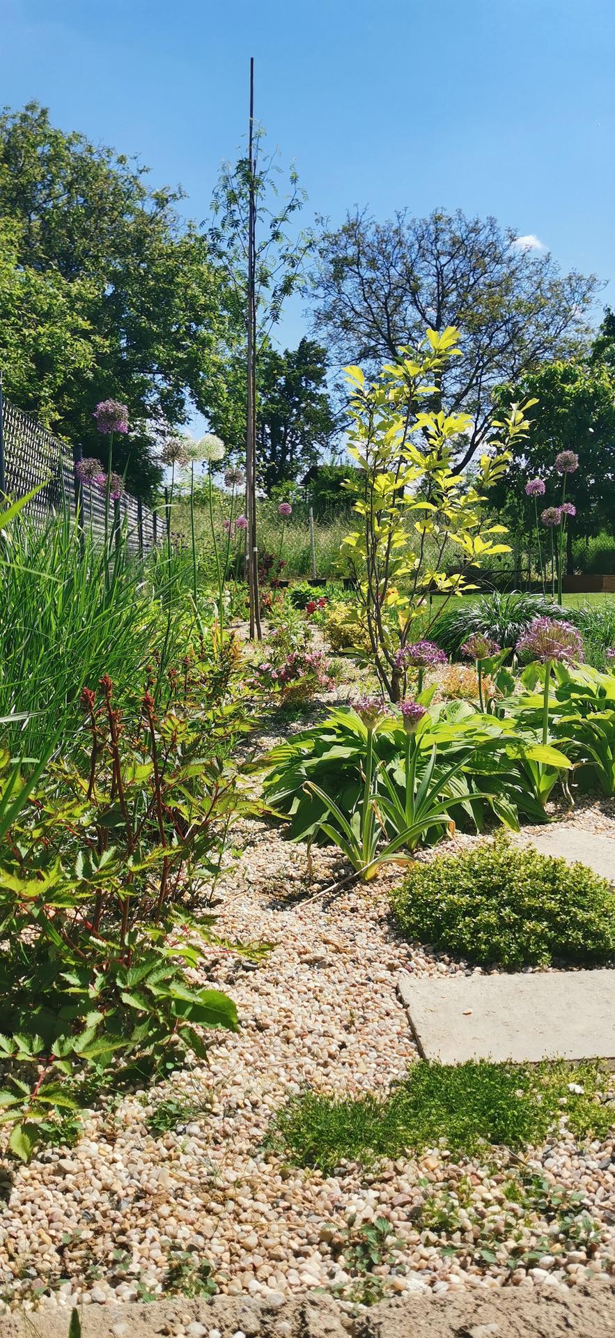 Začínáme se zahradou - Obrázek č. 42