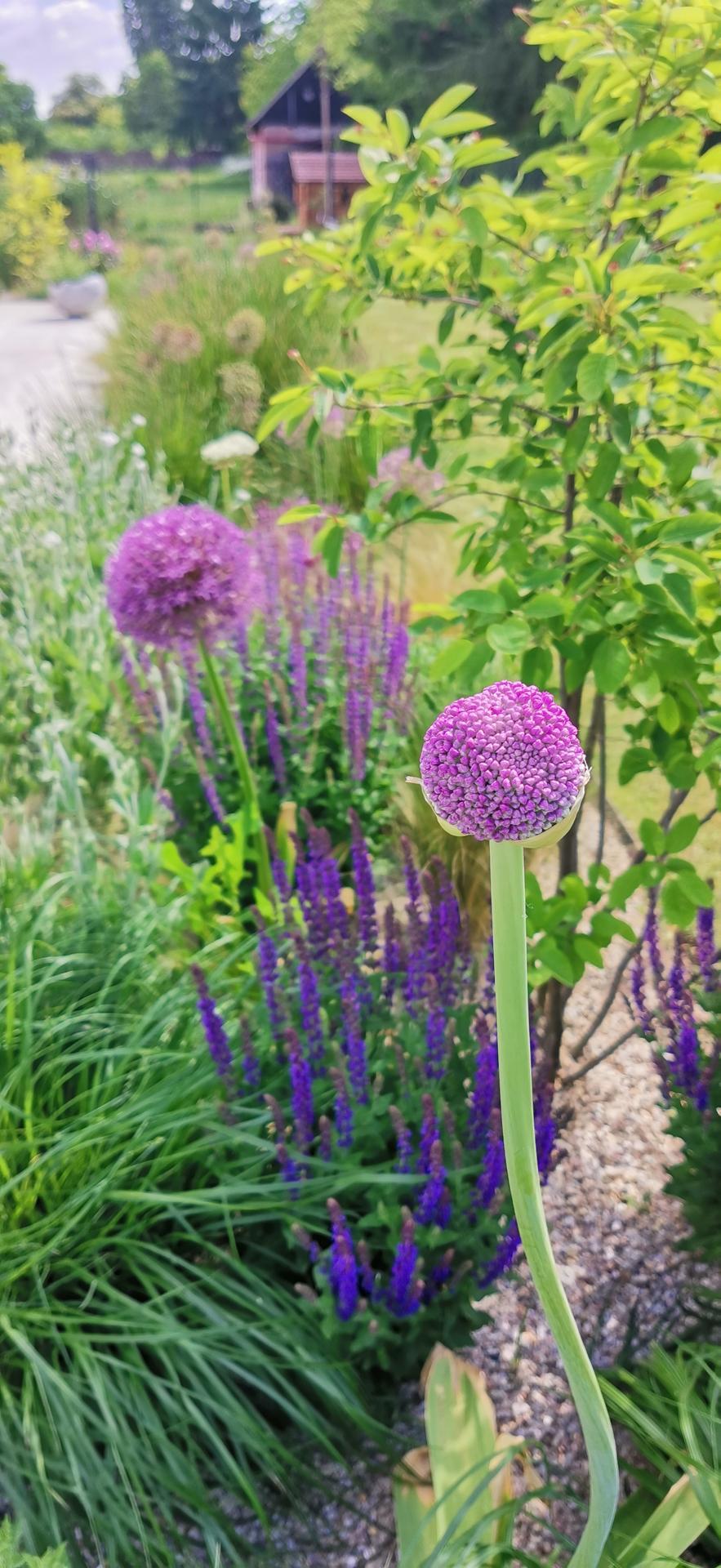 Začínáme se zahradou - Obrázek č. 53