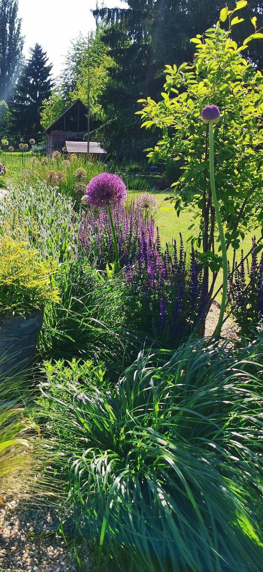 Začínáme se zahradou - Obrázek č. 50