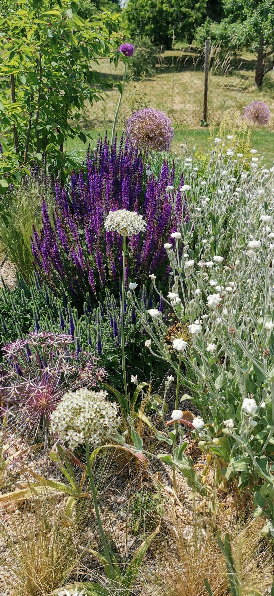 Začínáme se zahradou - Obrázek č. 55