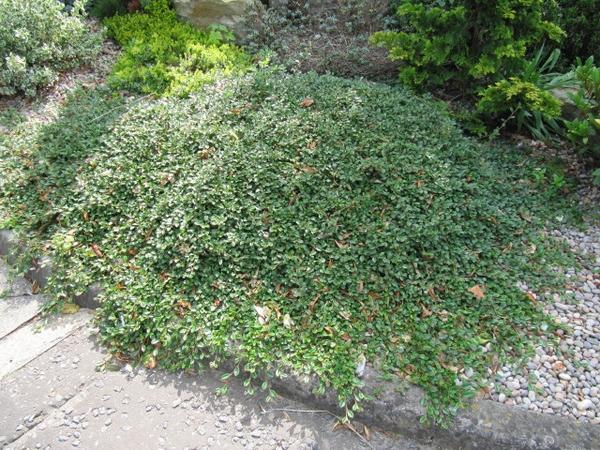 Začínáme se zahradou - Obrázek č. 46