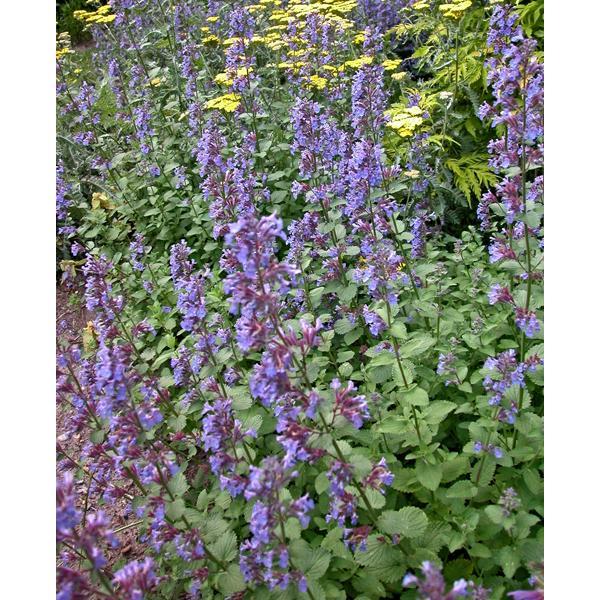 Začínáme se zahradou - Obrázek č. 56