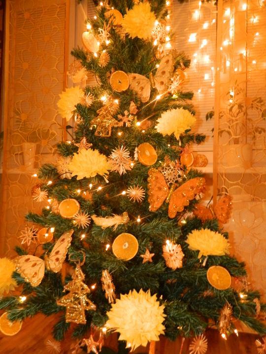 Zmeny nasho strom ceka 2003 - 2016 - 2012              ... tento rok bude znovu malá zmena a už sa vééľmi teším :-)