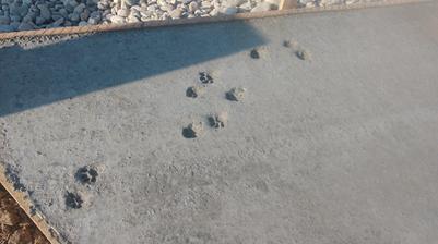 ráno po betonáži, nejaká cica mica nechala odtlačky rúk a nôh :)