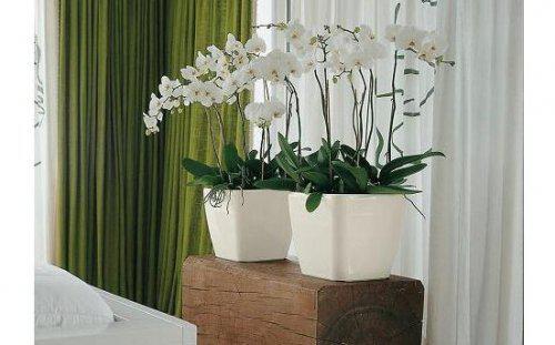 Domeček na venkově inspirace - královny květin miluju....