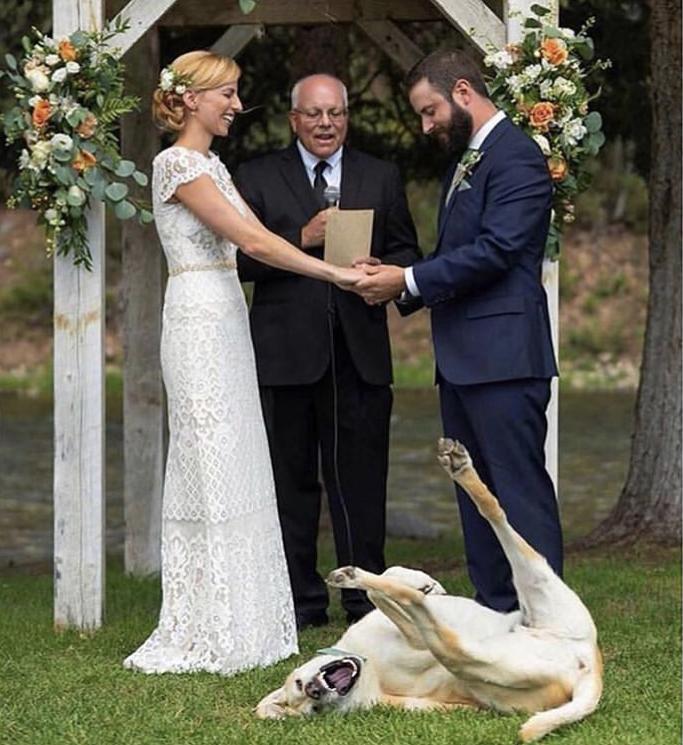 Chlupatí svatebčané - Obrázek č. 3