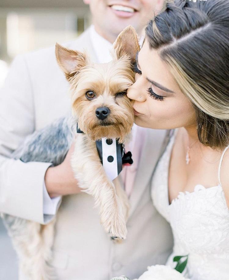 Chlupatí svatebčané - Obrázek č. 10