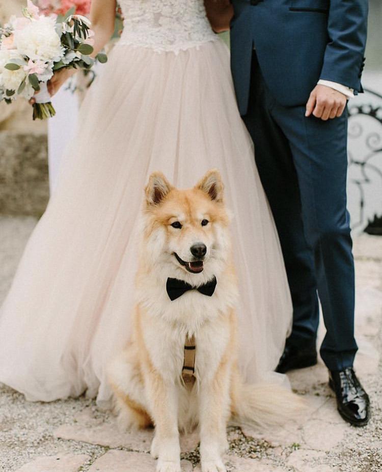 Chlupatí svatebčané - Obrázek č. 13