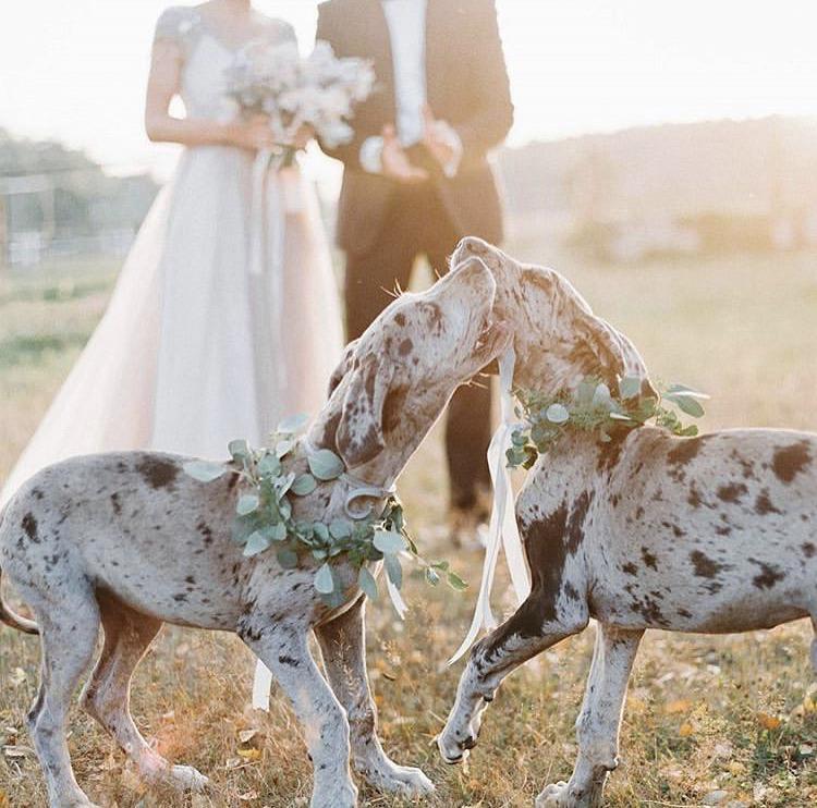 Chlupatí svatebčané - Obrázek č. 16