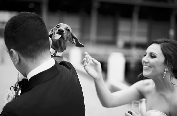 Chlupatí svatebčané - Obrázek č. 18