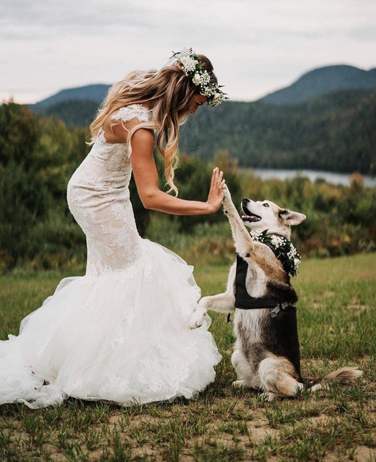 Chlupatí svatebčané - Obrázek č. 28