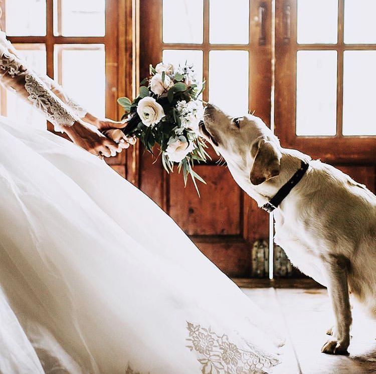 Chlupatí svatebčané - Obrázek č. 31