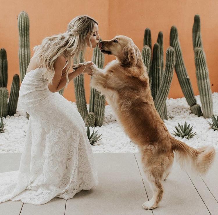 Chlupatí svatebčané - Obrázek č. 34
