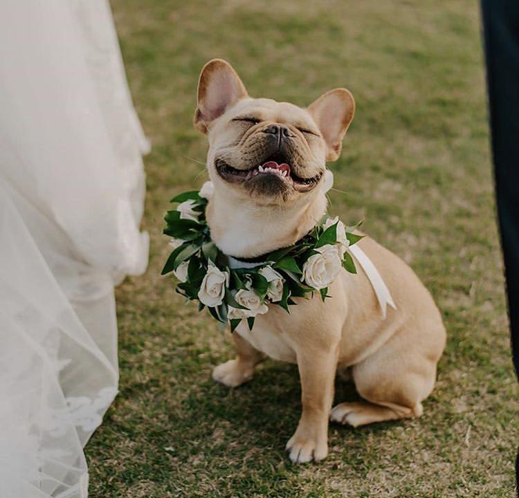 Chlupatí svatebčané - Obrázek č. 37