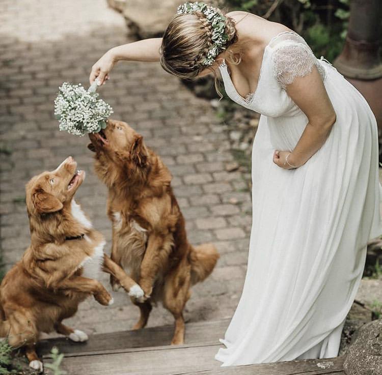 Chlupatí svatebčané - Obrázek č. 45