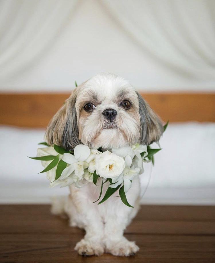 Chlupatí svatebčané - Obrázek č. 46