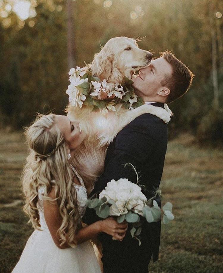 Chlupatí svatebčané - Obrázek č. 47