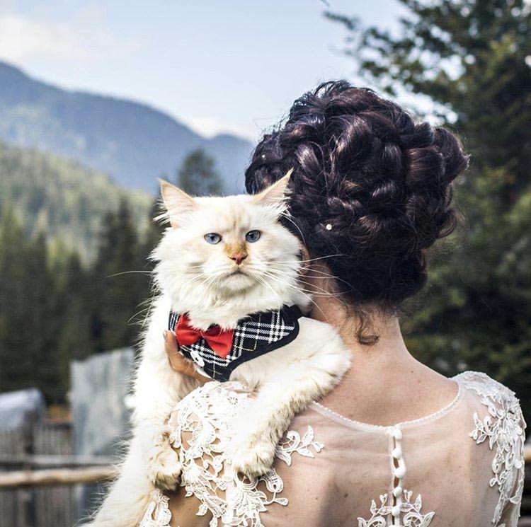 Chlupatí svatebčané - Obrázek č. 53