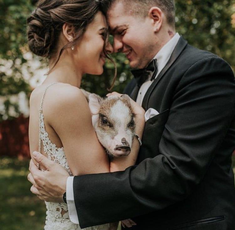Chlupatí svatebčané - Obrázek č. 56