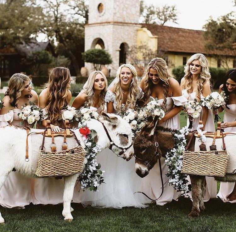 Chlupatí svatebčané - Obrázek č. 60