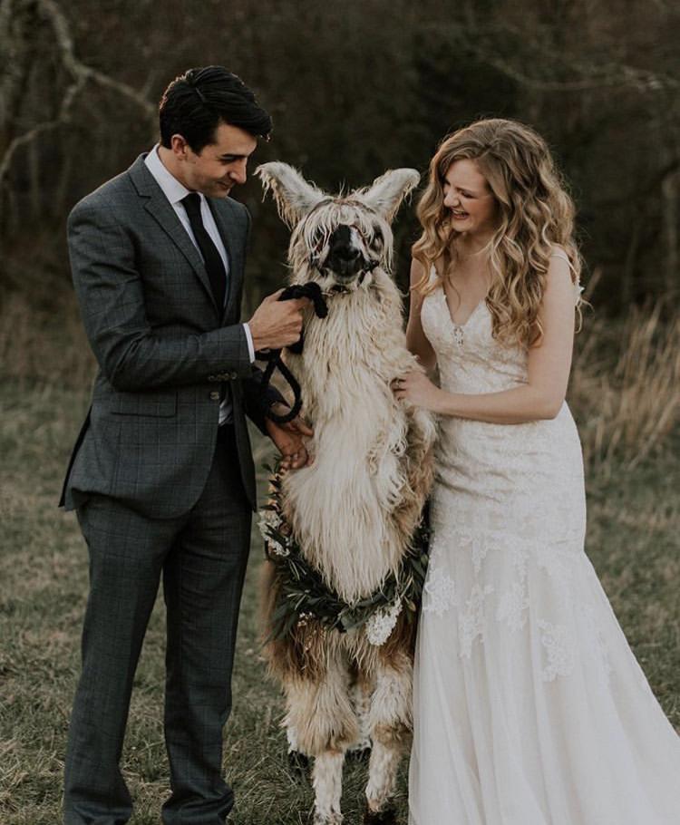 Chlupatí svatebčané - Obrázek č. 64
