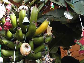 (ne)tradičné vianoce - banánovník