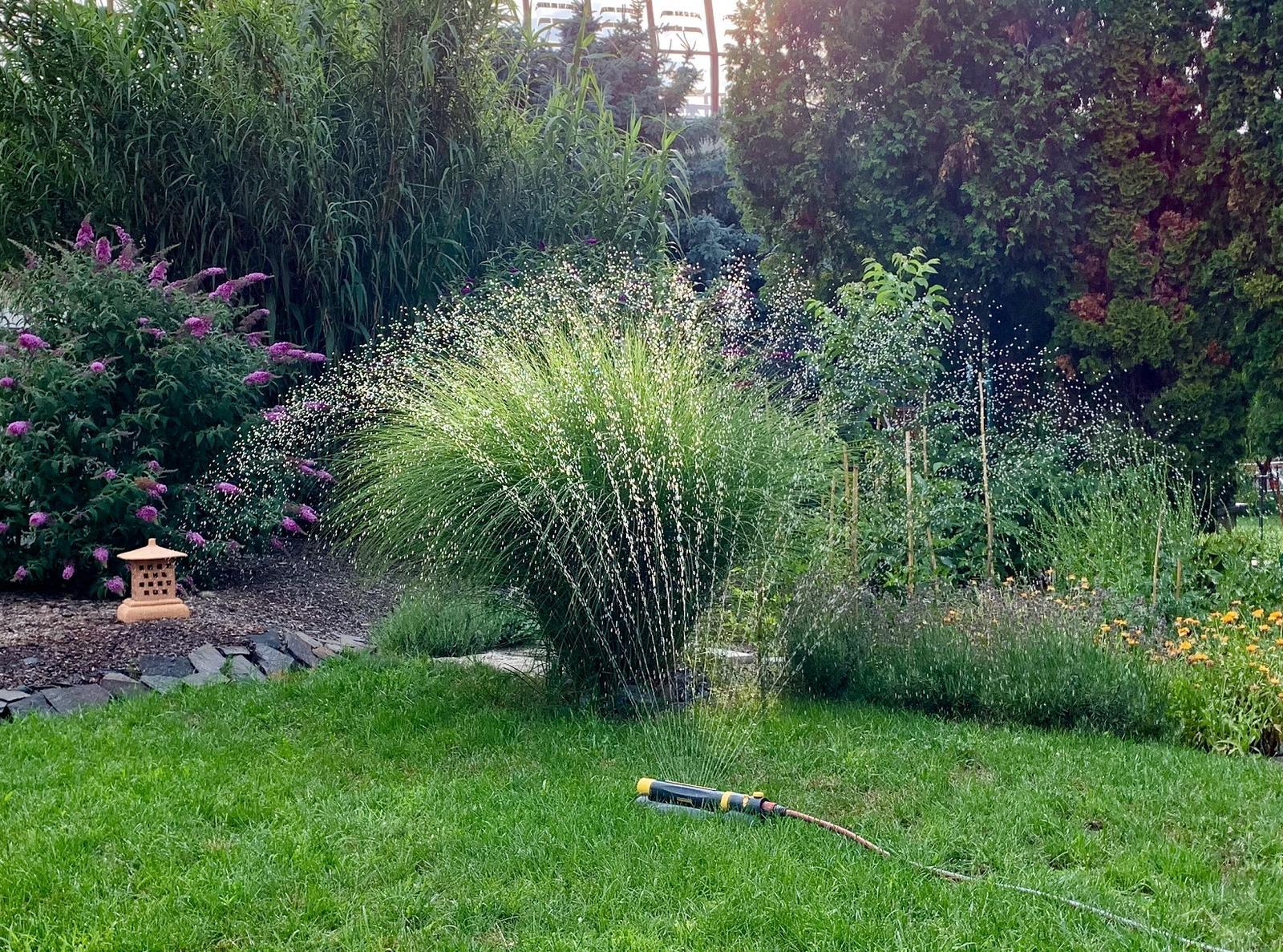 sadenice trávy - Obrázok č. 1