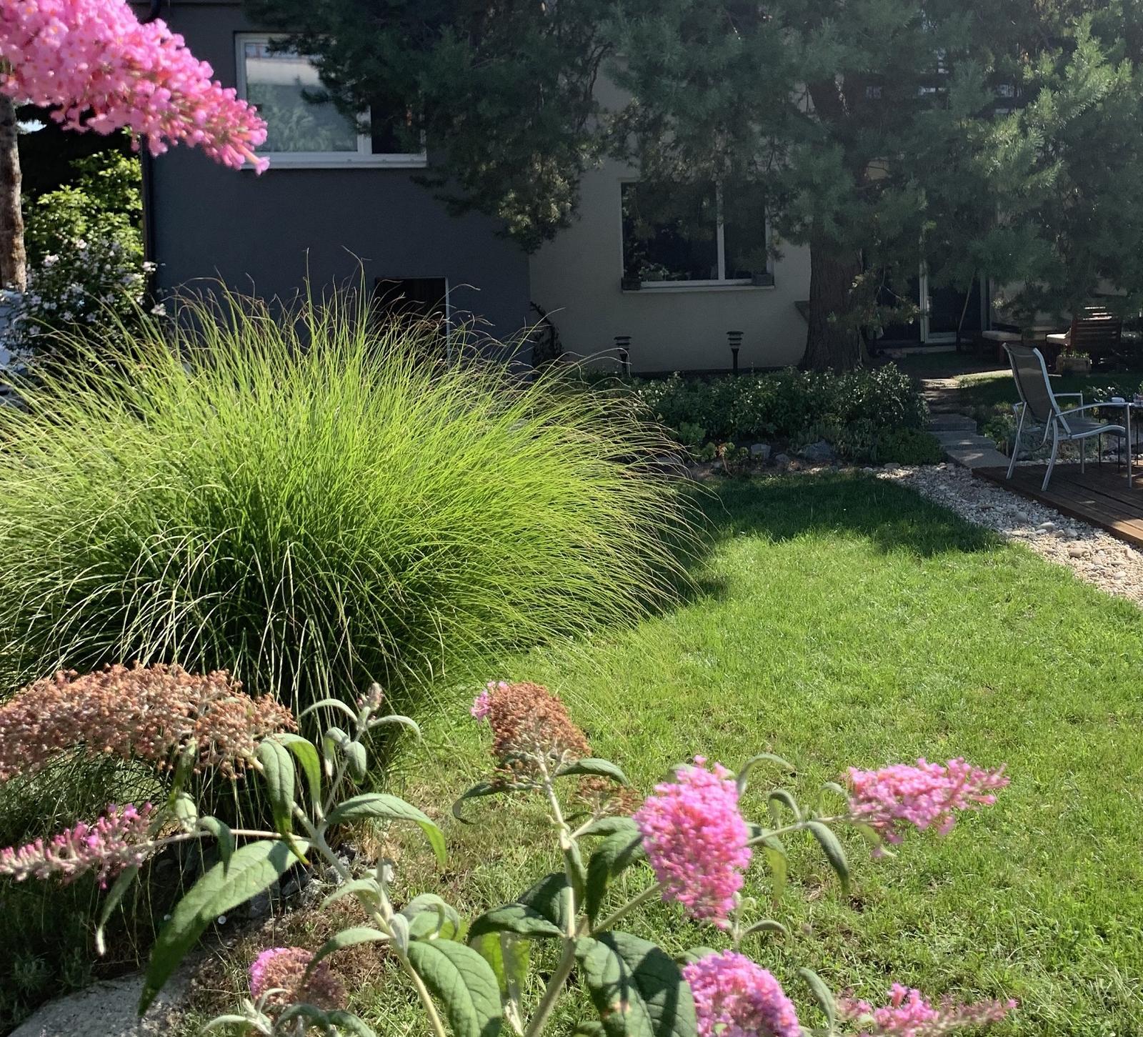 sadenice trávy - Obrázok č. 2