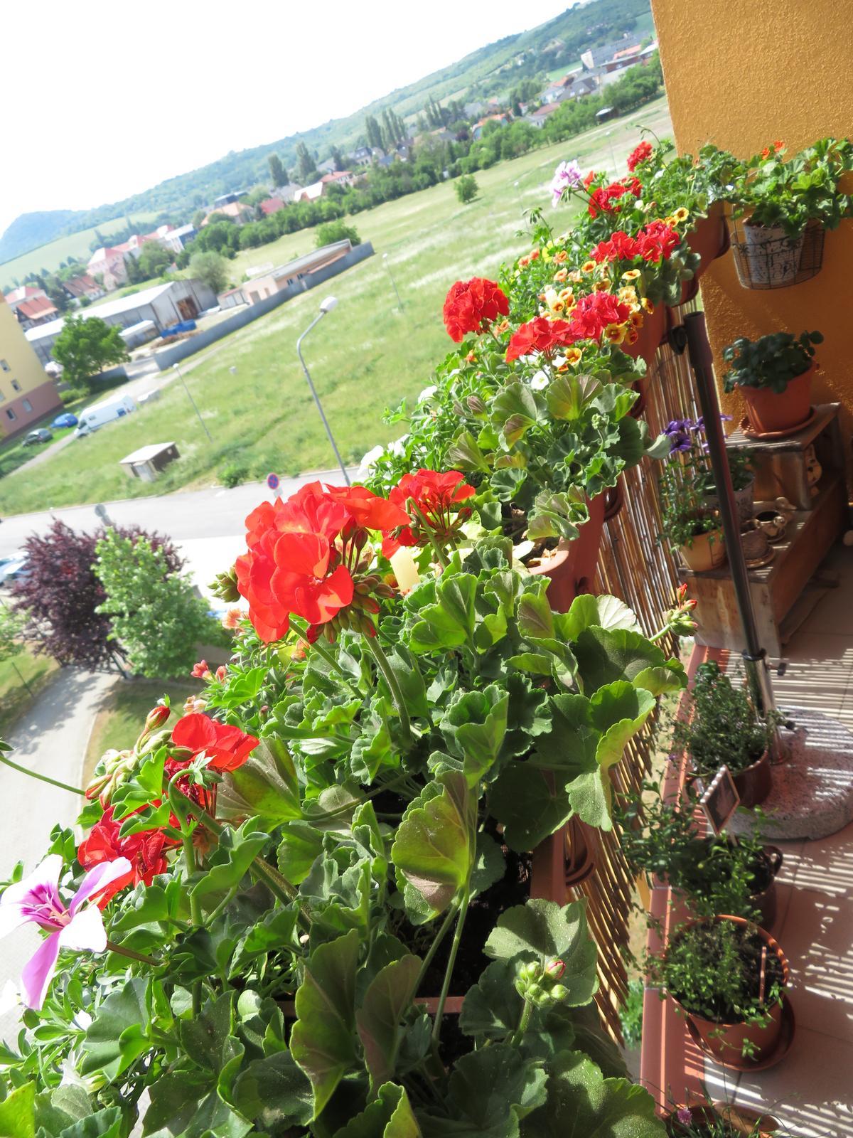 Na balkoně - Obrázek č. 35