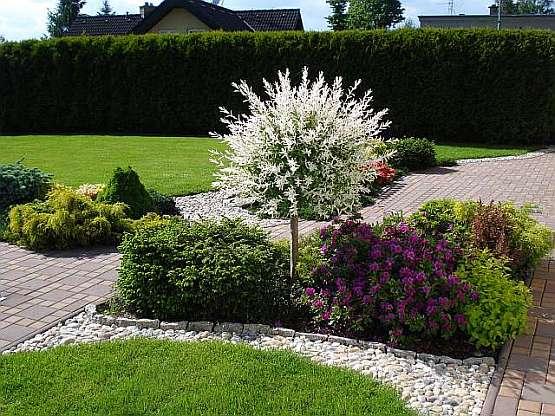 Zahrada - bude tam japonská vrba